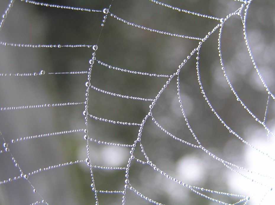 Morning dew on the strands of a spider's web