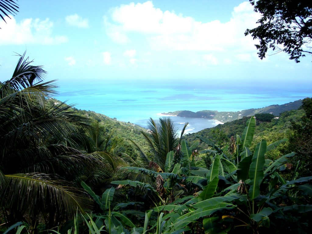 the view of a dense jungle with a shallow cove in the distance