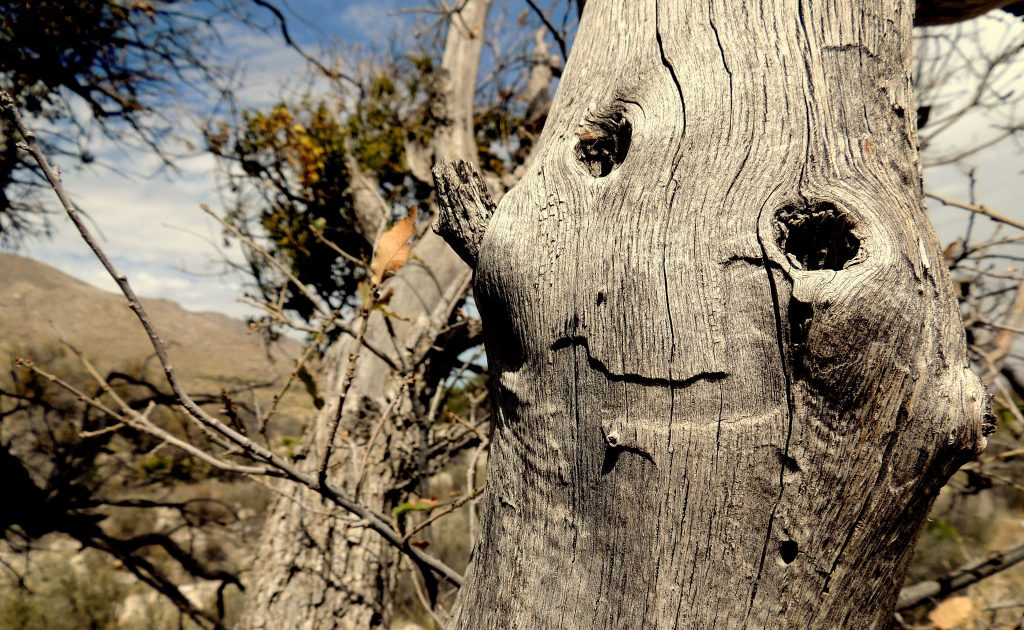 A tree who appears to be smiling
