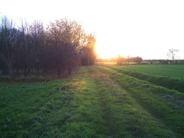 Sunshine in the later times of the day is cast upon a grassy field