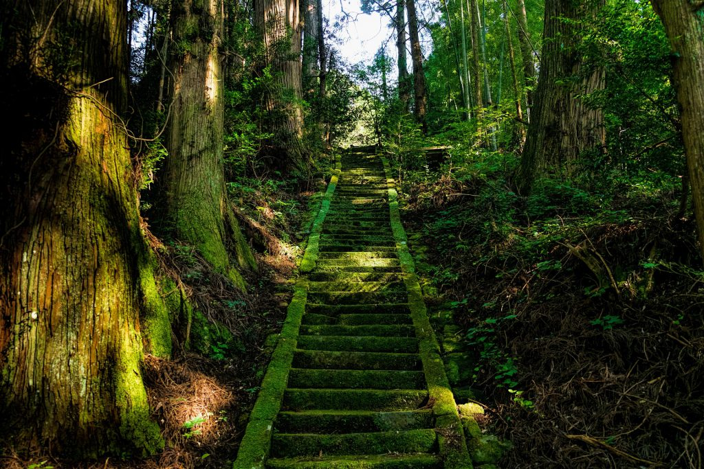 a large moss covered staircase in a forest