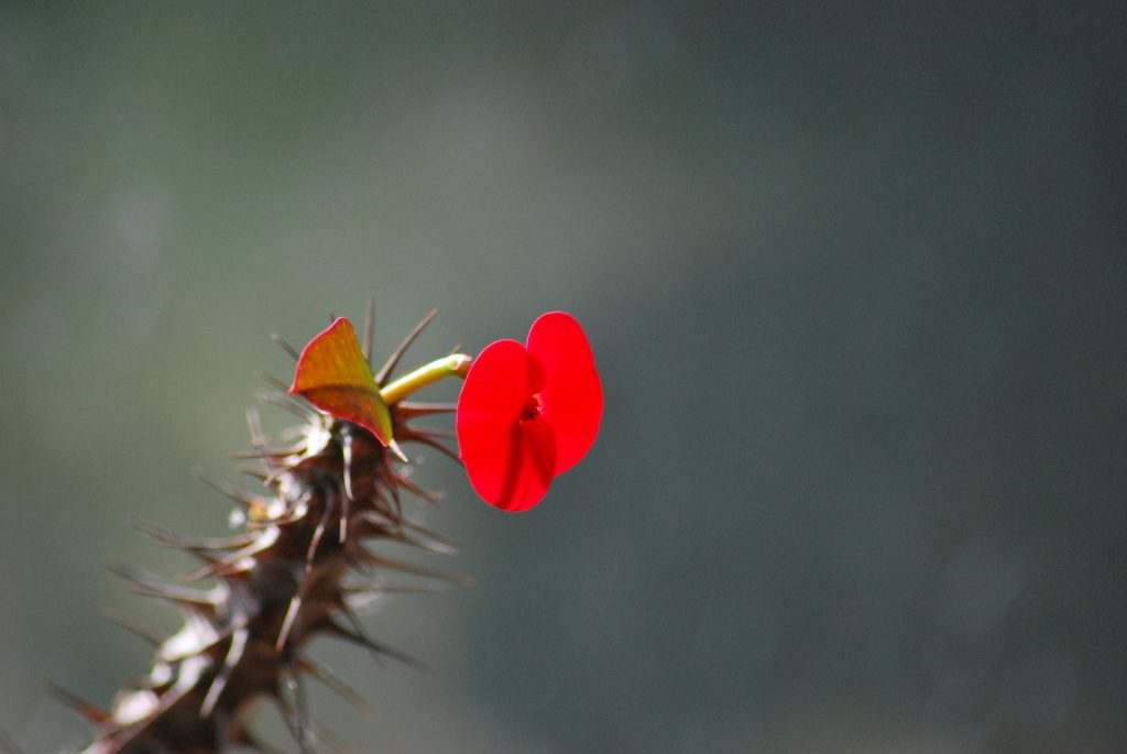 a lone flower blooms on a cactus