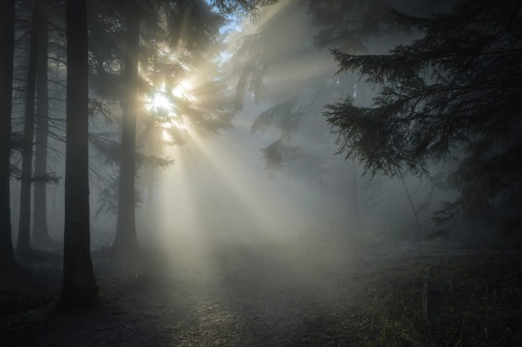 sunlight shines through fog in a forest